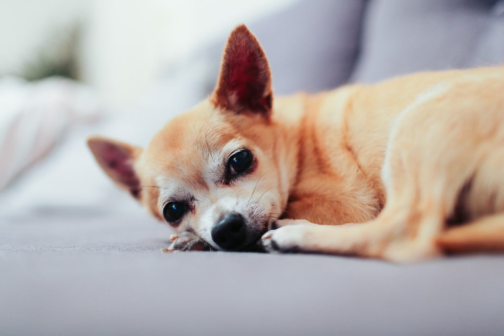 How Can I Help my Child Understand the Loss of  Pet