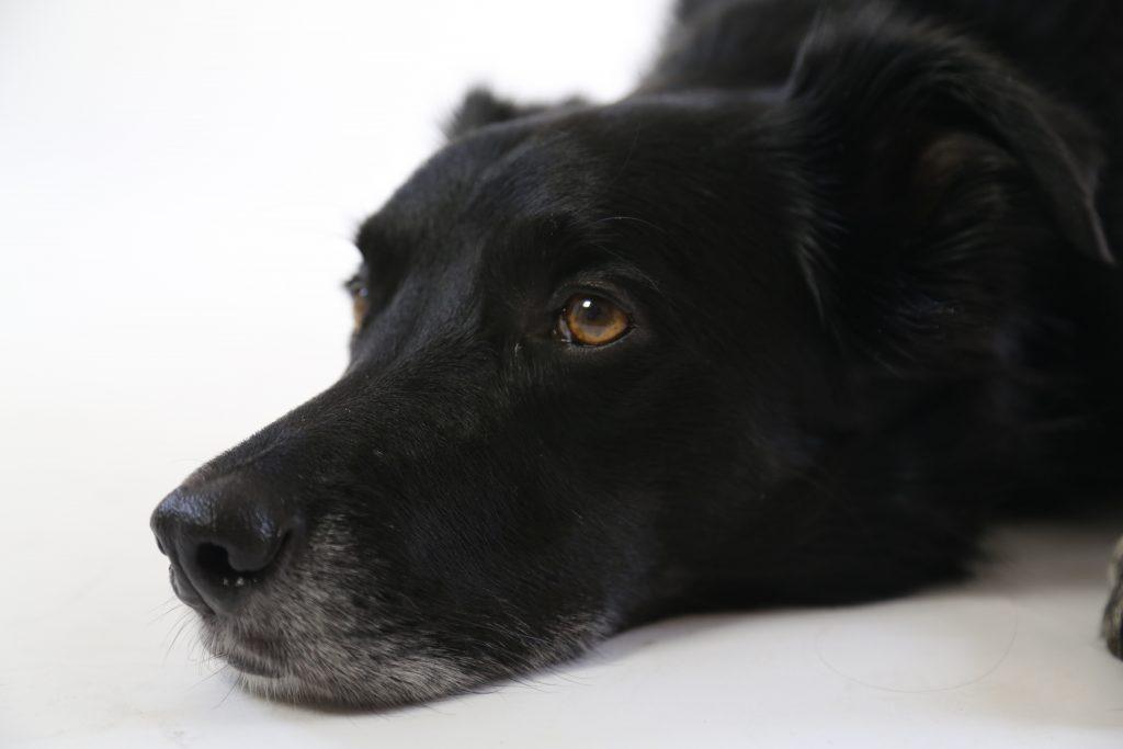 My dog has cancer, when do I put him down?