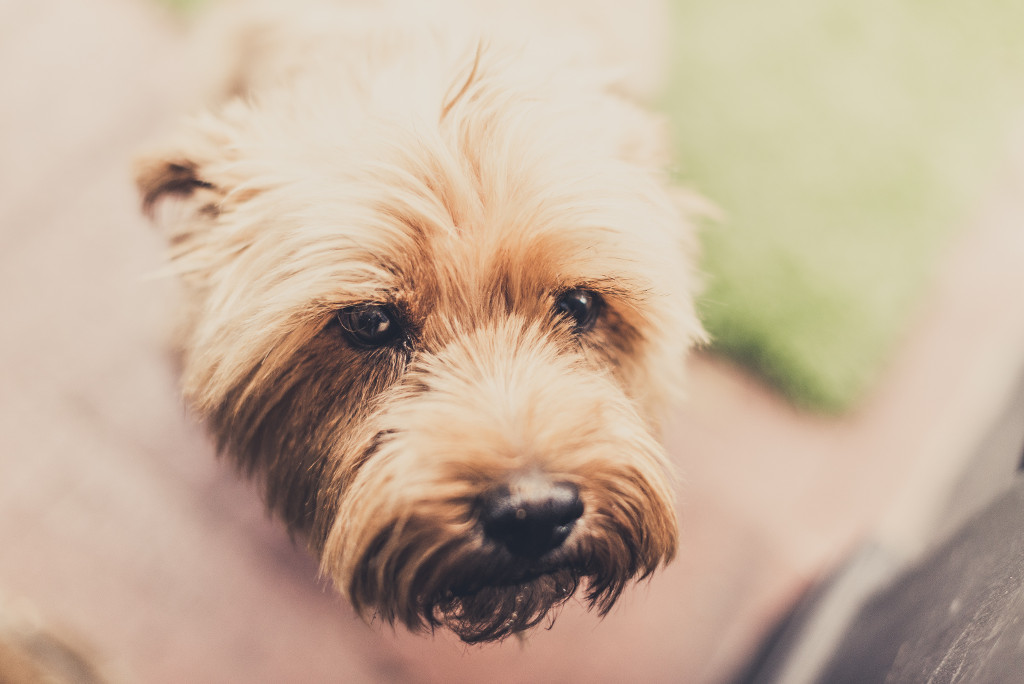 5 Tips For Getting Through A Planned Dog Euthanasia