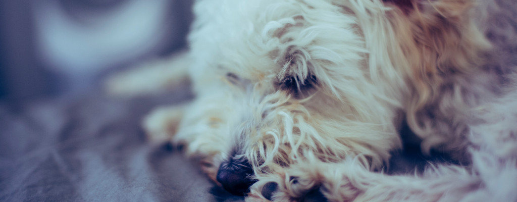 Did I Do The Right Thing By Euthanising My Dog?