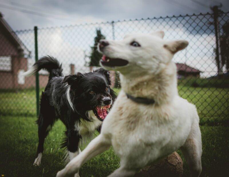 aggressive dog behaviour