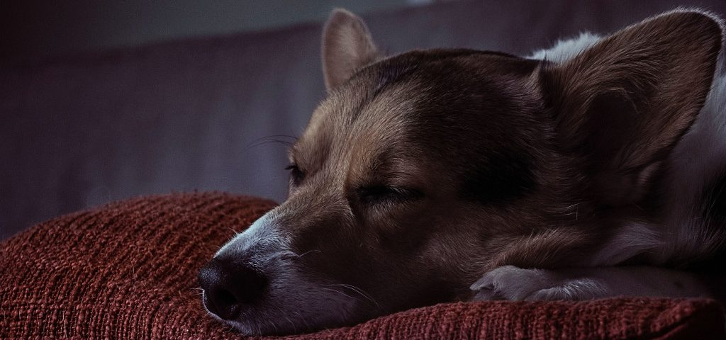 How long does it take for a dog to be put to sleep?