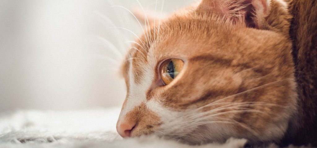 How to tell if a cat is dying: 6 signs to watch out for