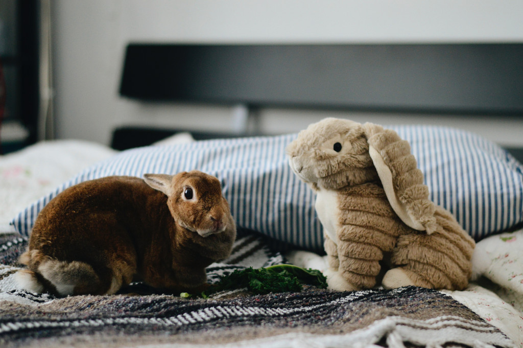 10 Common Rabbit Diseases