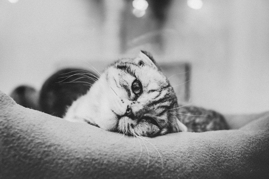 Cat Euthanasia Cost