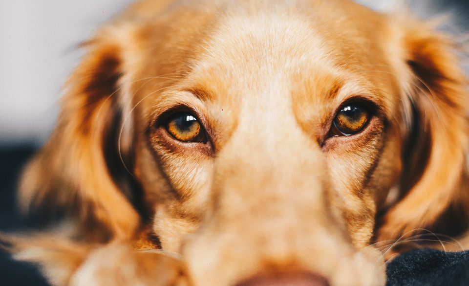 Dog lymphoma - when to euthanise