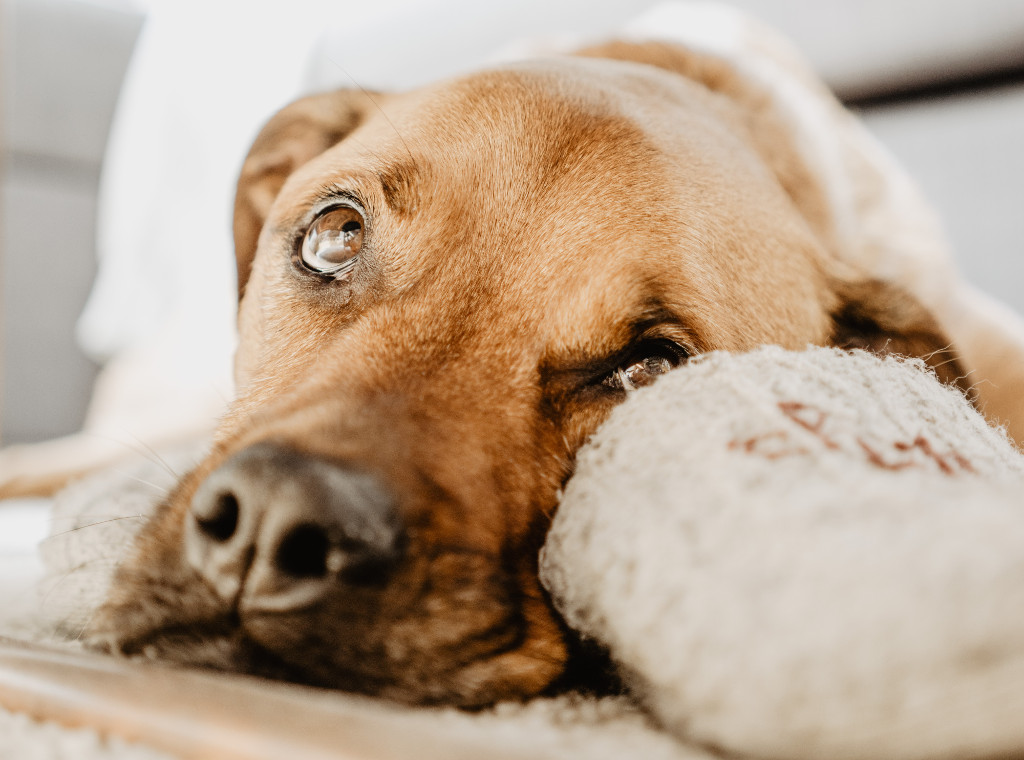 Reasons For Loss Of Appetite in Dogs
