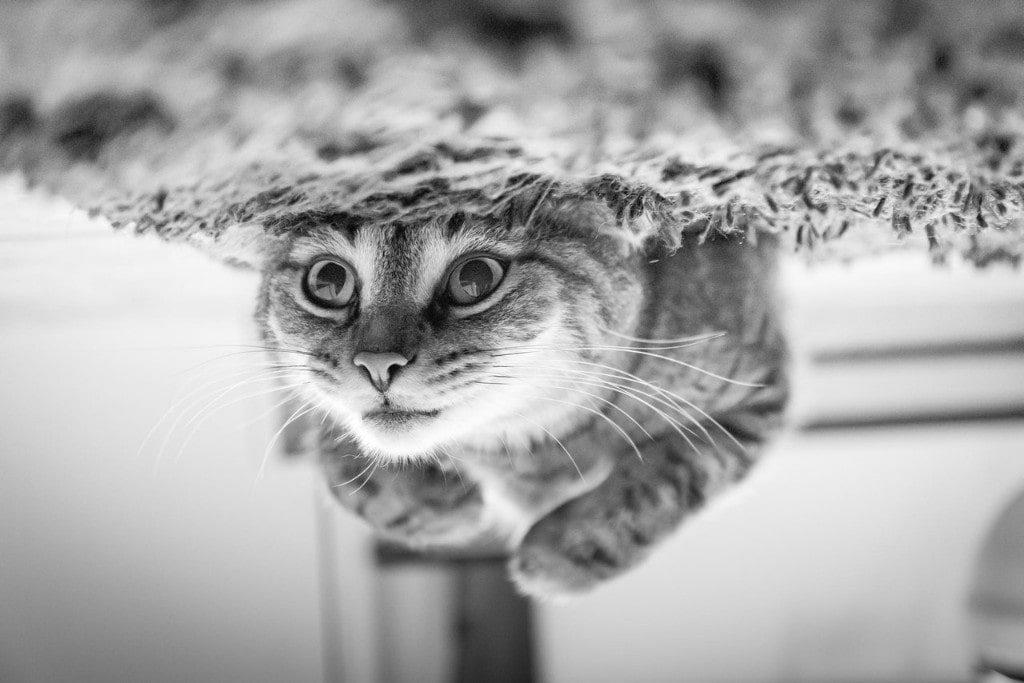 Cat Acting Strange