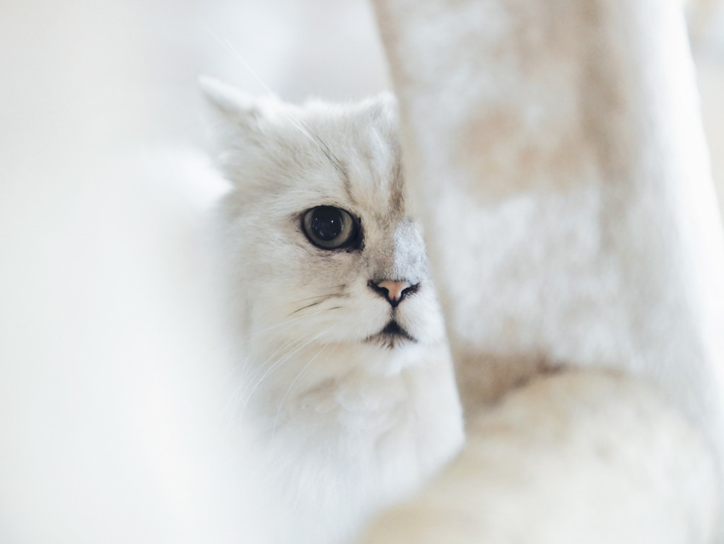 Is Your Cat Acting Strange