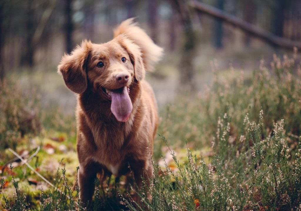 How Long Do Dogs Live? Dog Breeds And Life Expectancy