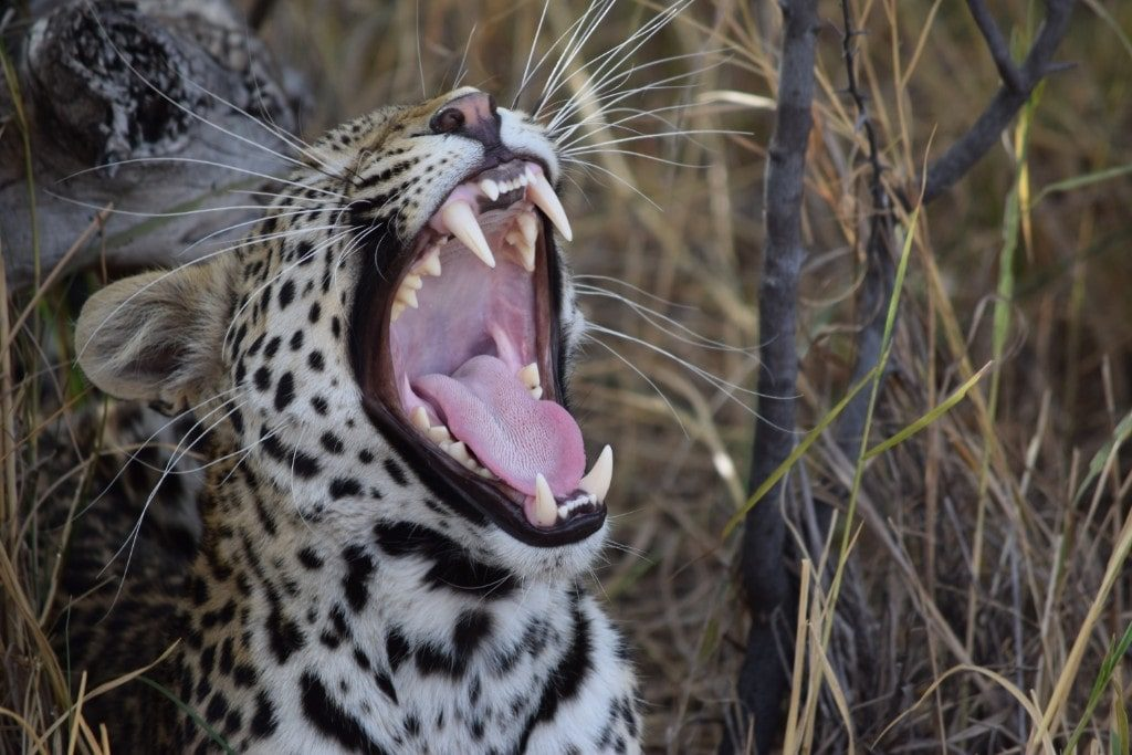 Your Cat has bad breath? Here is why should be worried