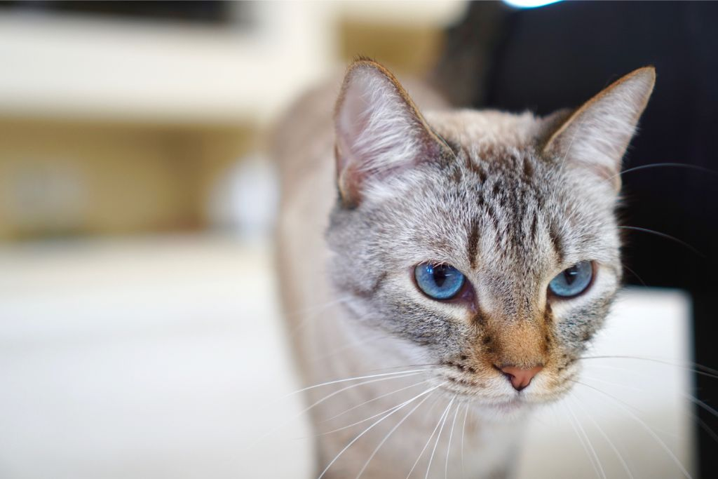 Cat Suddenly Urinating In House? Medical Causes And Symptoms