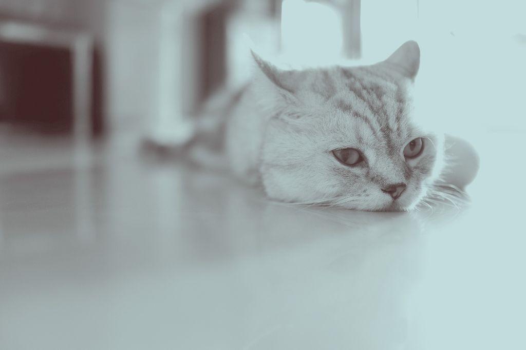 Cat Seizures: Symptoms And Causes