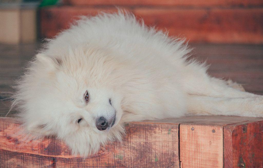 Dog seizures, symptoms and causes