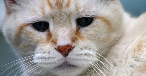 Feline Dementia