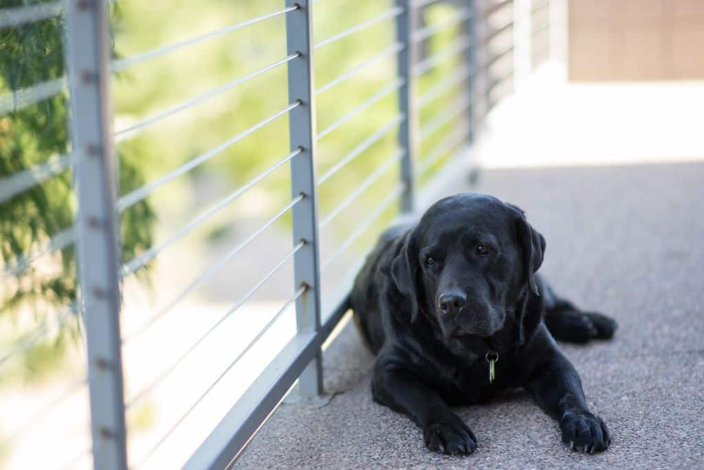 When To Euthanise A Dog With Osteosarcoma
