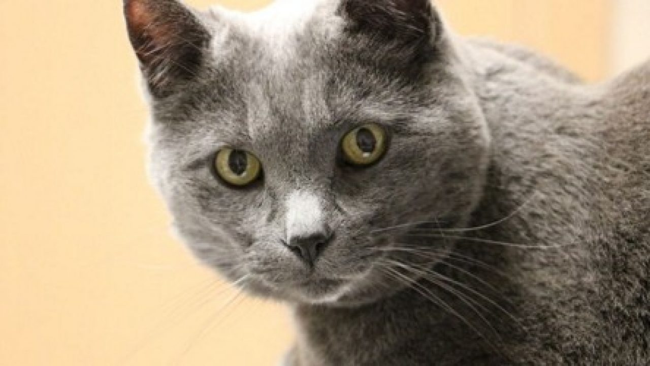 Cat Liver Failure When To Euthanize Cloud 9 Vets