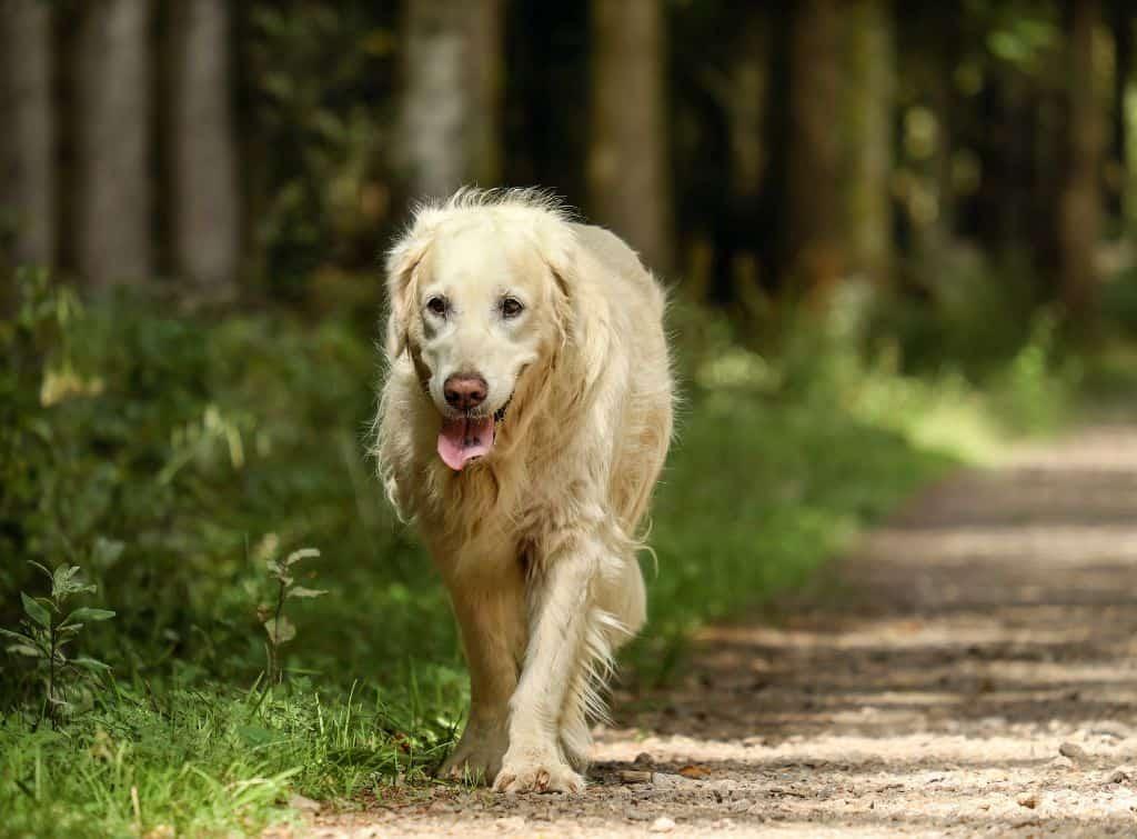 dog in lane