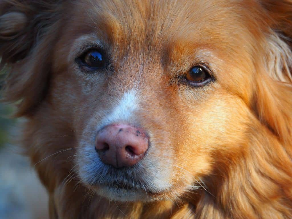 Dog Bladder Cancer - When To Euthanise