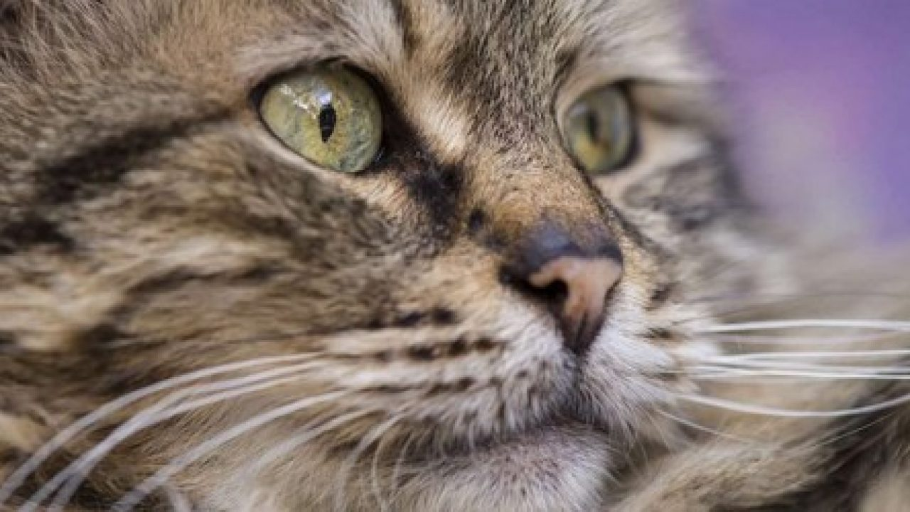 Kidney Disease In Cats When To Euthanise Cloud 9 Vets