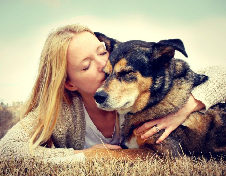 Dog Euthanasia and Kidney Failure - When To Consider Pet Euthanasia