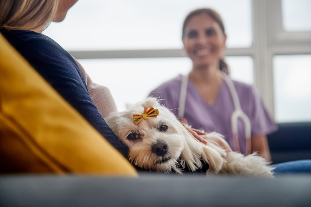 Dog Brain Tumor When To Euthanize