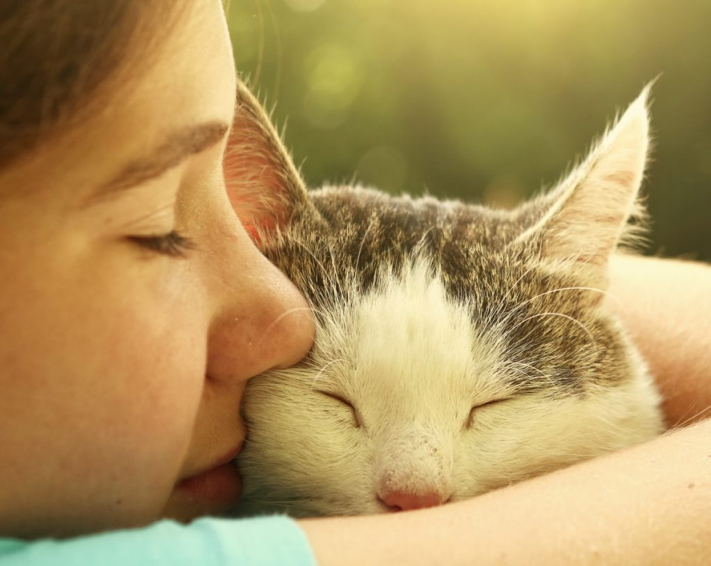 What You Must Understand About Cat Euthanasia