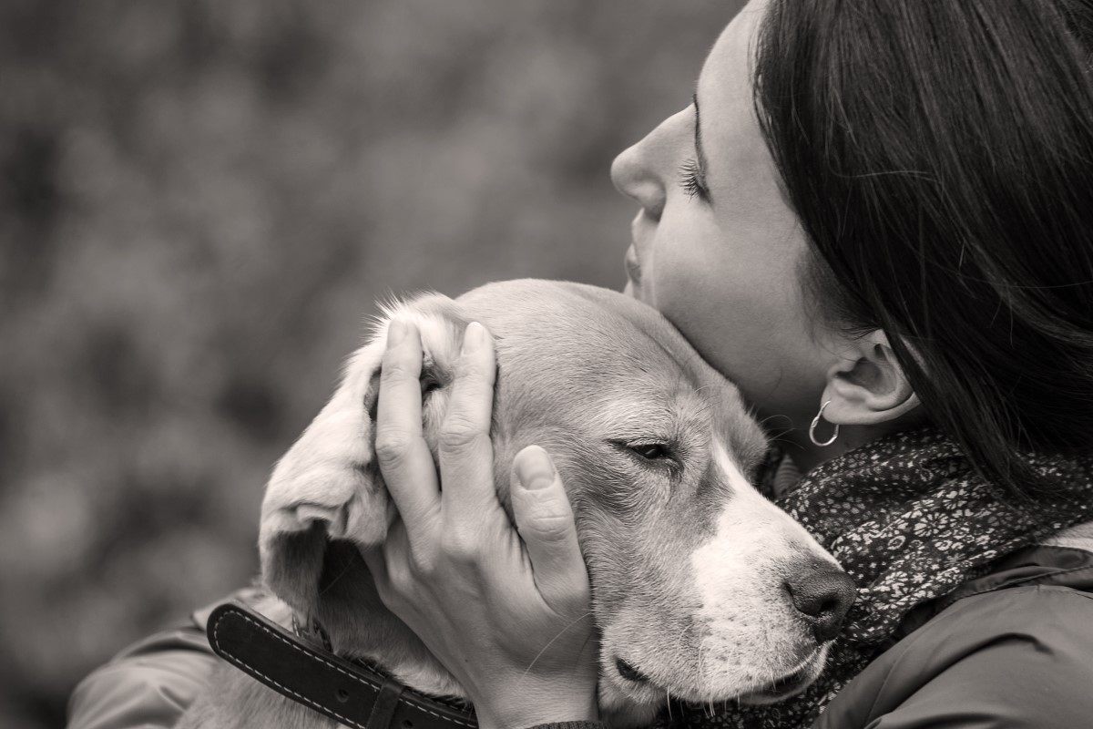 signs to put dog to sleep and what happens during pet euthanasia