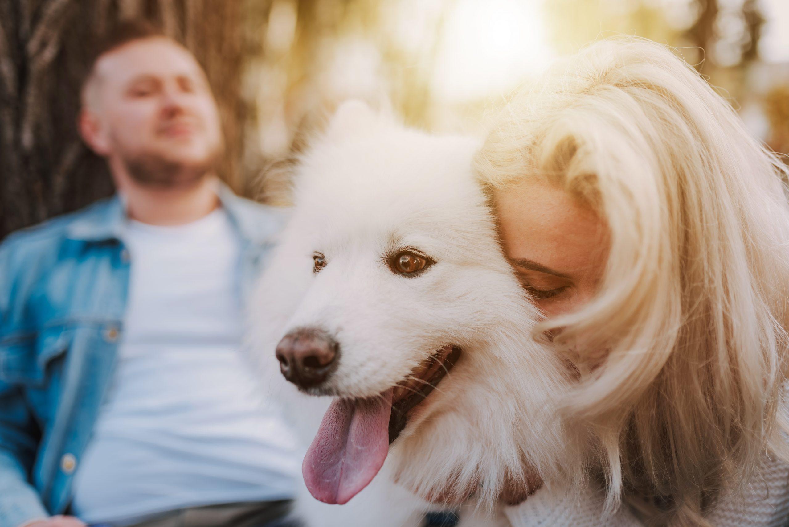 Dog Kidney Failure - When To Euthanize