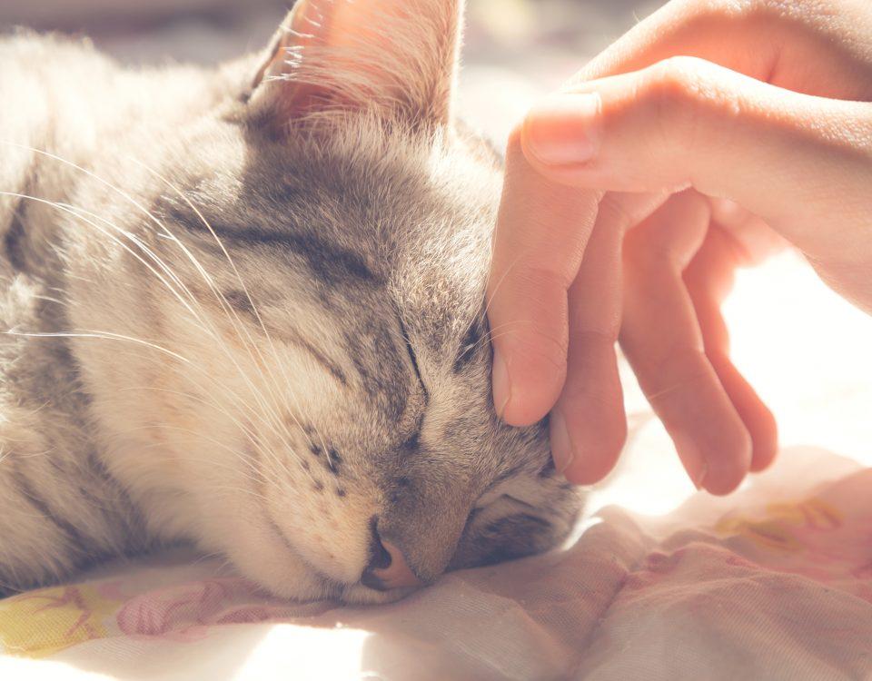 Pet will