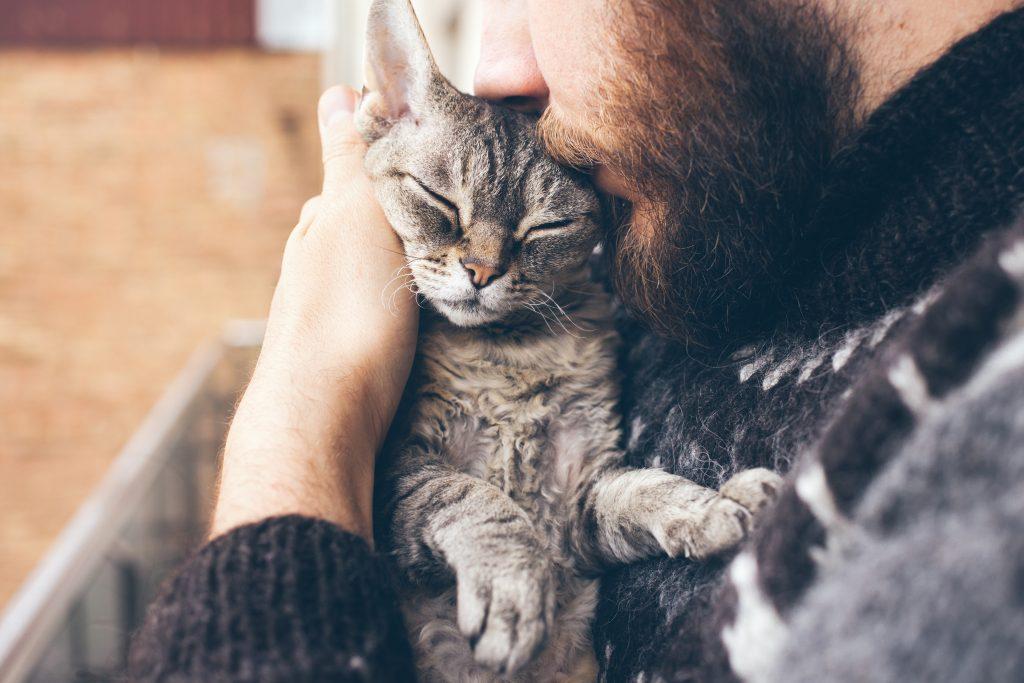 feline dementia when to euthanize